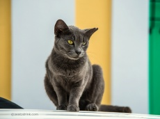 DCS_1668-cat